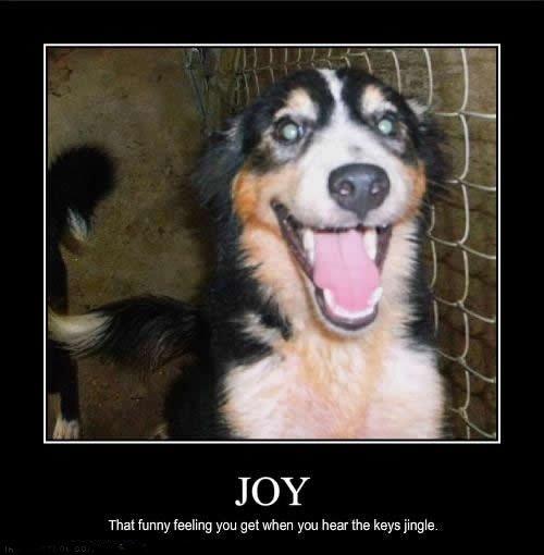 joy.. . That funny feeling you gesehen you hear the keys jingle. Dog Cute smile happy