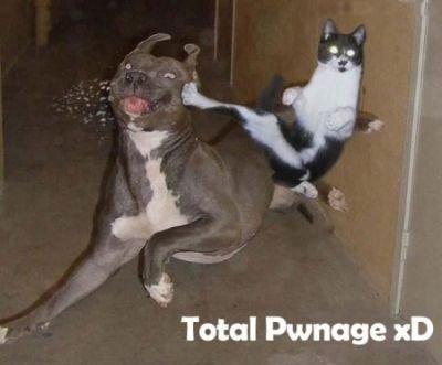 karate kitty. .