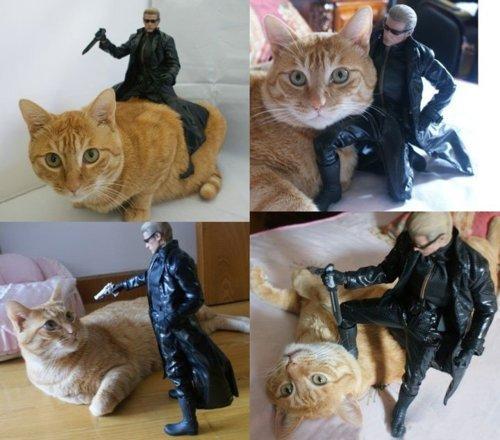 kat. asd.. holy that's a big cat!!!! asd