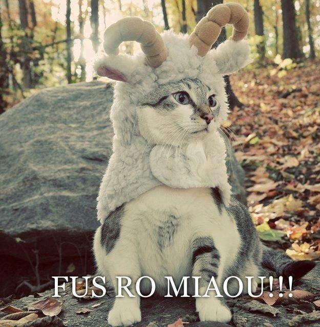 Khajiit. Cats= Internet Not OC.. fus ro nyaa~