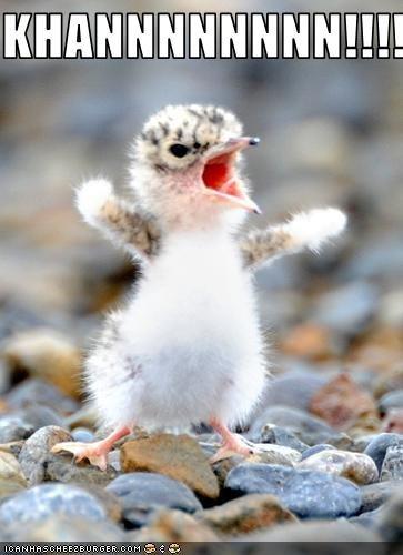 KHAN. KHAN!!!!!!. Cs E Ci,. Awwwww captioned bird c