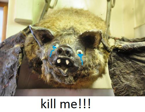 kill me !!!. why wont someone just end it.. Twitch? bat kill me