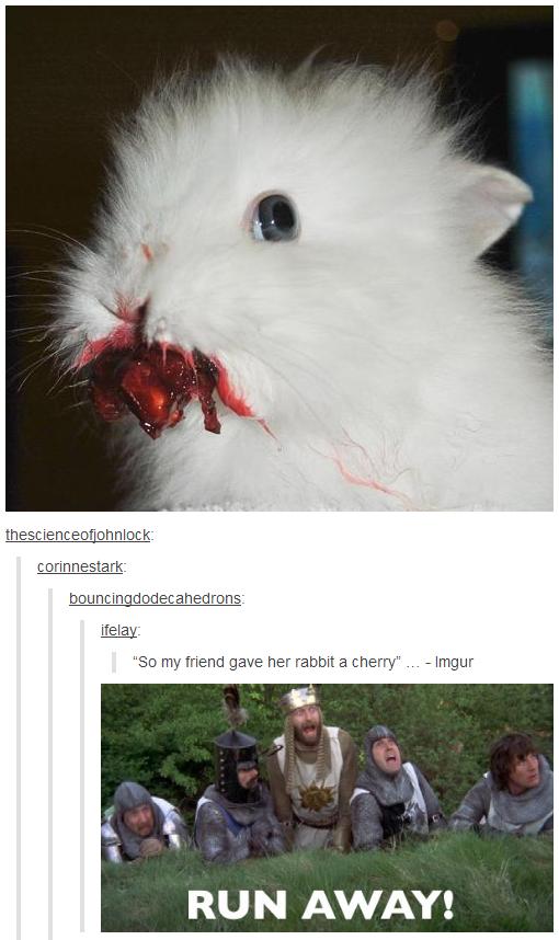 "Killer rabbit. . C ori n n esta rlc 345 So my friend gave her rabbit a cherry"" ... - Imgur RUN AWAY!. Anybody ever read these books? Rabbit Monty python tumblr dumblr humblr"
