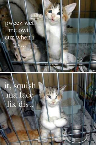 kitteh. . pleez wet meoww, cu wheni thtat .. Okay kitteh squishes Face
