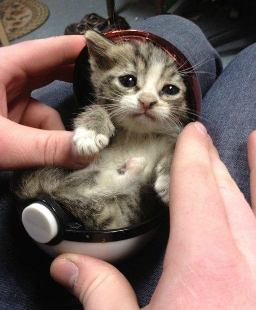 Kitten. .