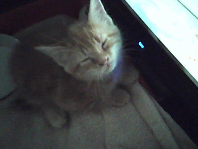 kitty. My new kitty . kitty