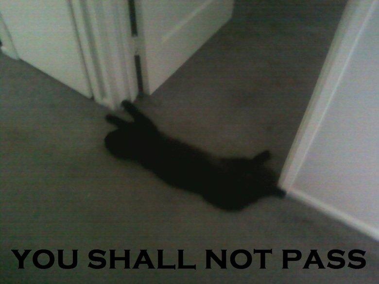 kitty says so. .. .