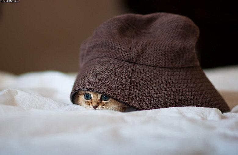 Kitty. . Kuv . ca