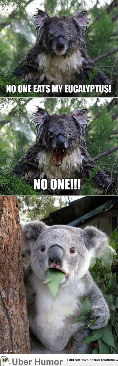 Koala. creds to uberhumor.com. PM thit HITS MY q ts CDM tital U 'mri H J. ?, r I did nut sexual reflations. pic related, i felt the need to post it