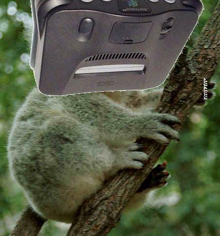 koala cannot be unseen. you are now aware n64 looks like a koala bear.. its a MONGREL koala Bear Nintendo retro gives Head lulz rocket