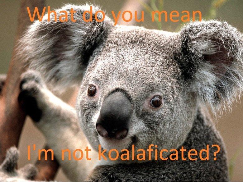 Koala. .. really?...koalaficated? it's koalafied!