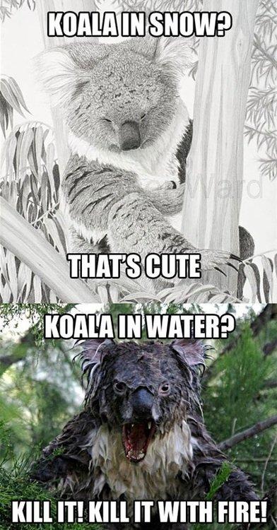 """Koala. . ill"""" IT! ' IT WITH TIRE!"""