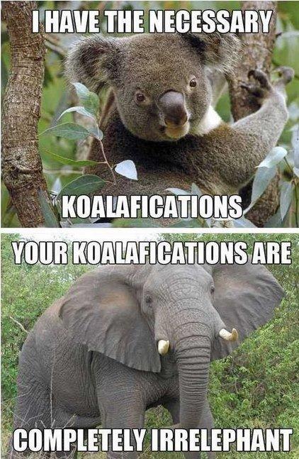 "Koalafications. . paye' . everr"". Haah, i lolled :P"