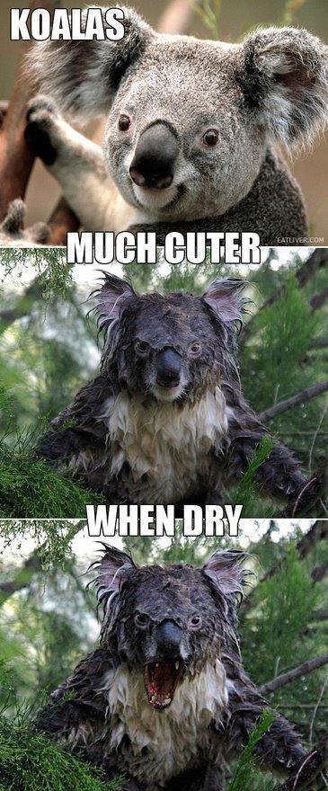 Koalas. So wet.... Scary as fuck