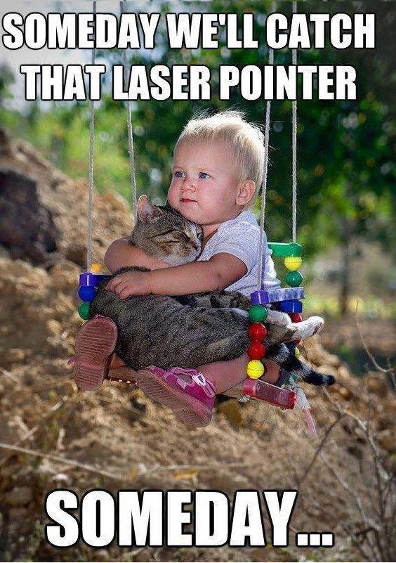"LAZEERRR POINTTERRR. . Ell GATE"" viii' POINTER. Cats face when it finally got it."