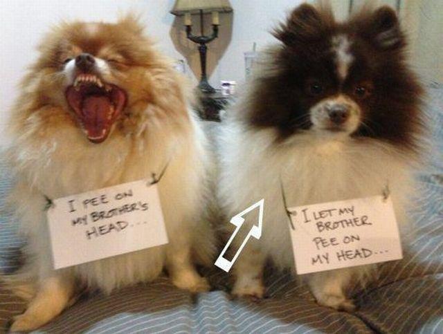 laughing dog. .