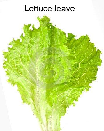 Lettuce. well.......???.. lettuce murder OP lettuce