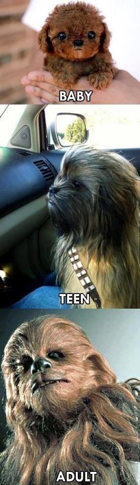 Life of Chewbacca. .. Elder
