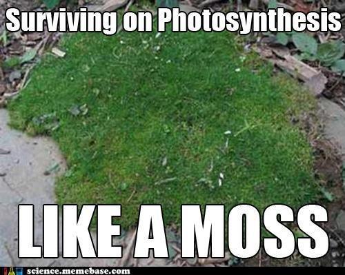 Like a Moss. . l i) tite T