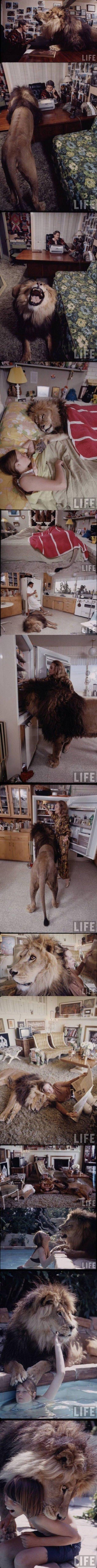 LION in a family. Not Mine. It's a Lion. Lion