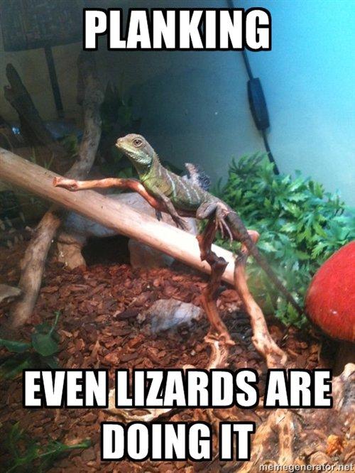 Lizards. spare a thumb for the lizard planking skillz. Rli' Ml) lira's.