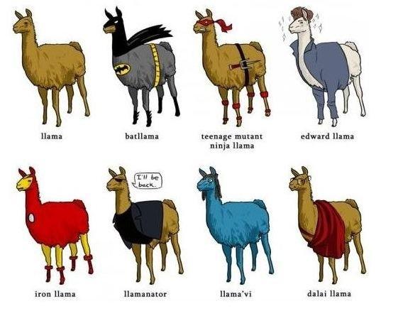 Llamas. . llama teenage mutant edward llama nitsuin llama Iran llama llama nun: Guarnieri llama. There's hardly any difference...they're both so happy