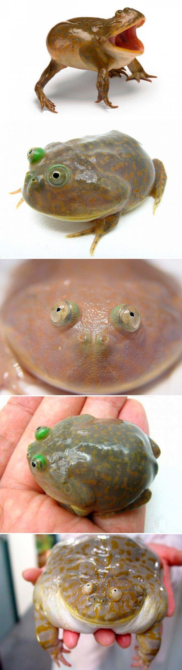 lol frog. .
