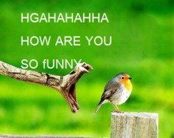 LOL Snake. . HAAHAHAH HA HOW ARE YOU