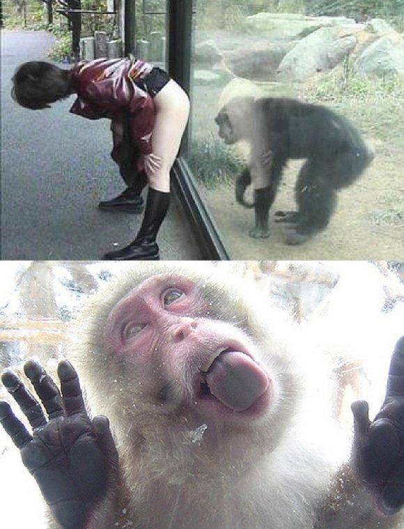 Lol monkey. .