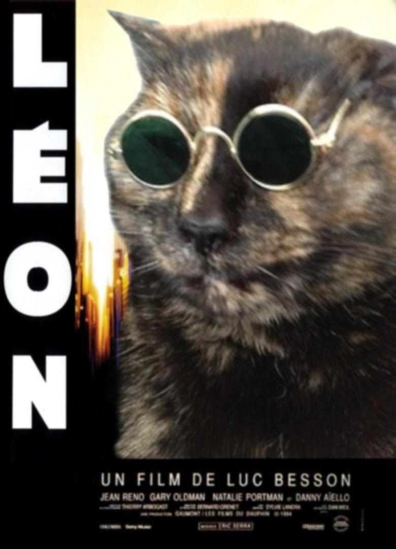 Léon. . Movie LEON sunglasses cat