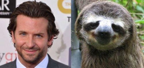 Lookin' Slothy. .
