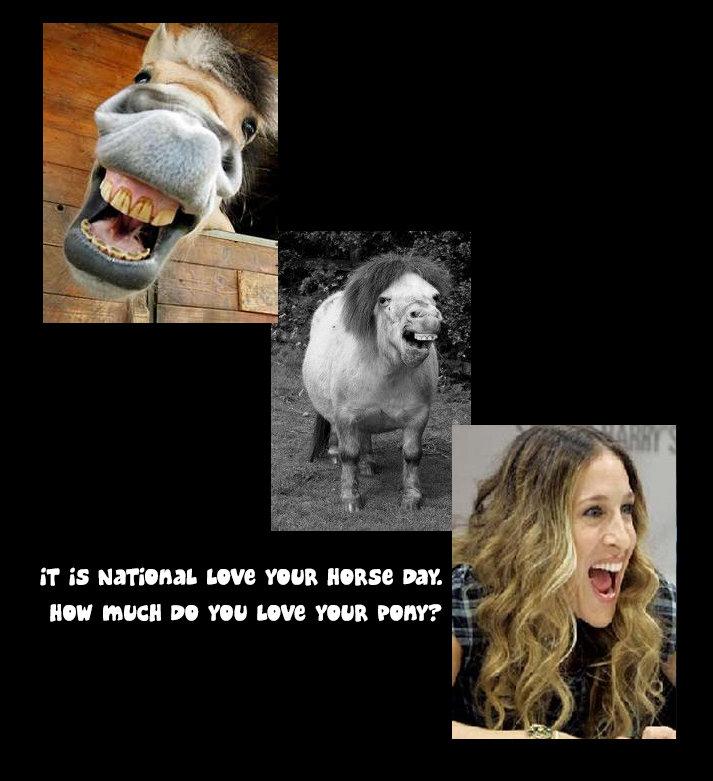 Love. . pony Horse