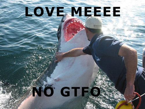 LOVE MEE. love me damnit.. Shark love me gtfo