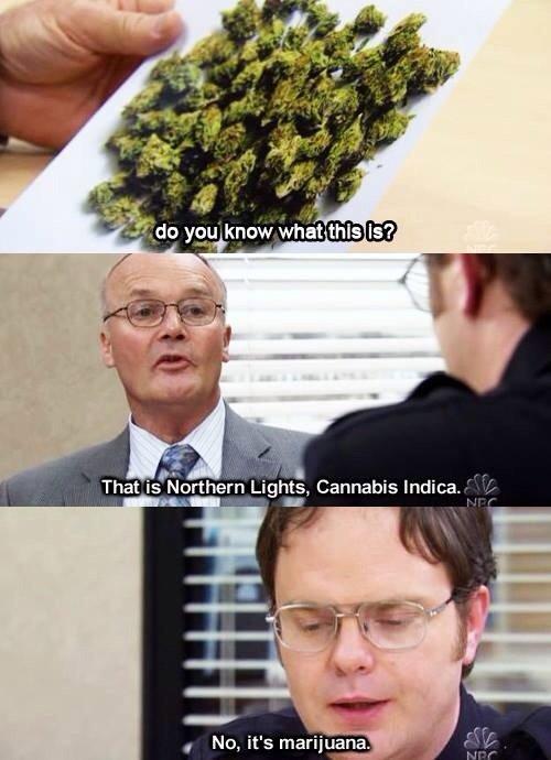 Mary Jane. . NES That Cannabis rmtrju