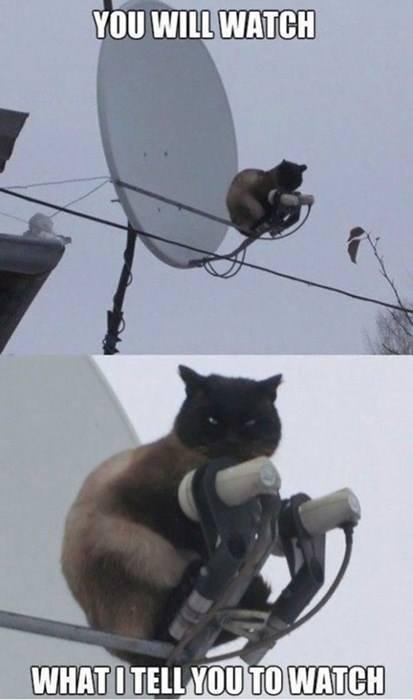 Master Cat. .