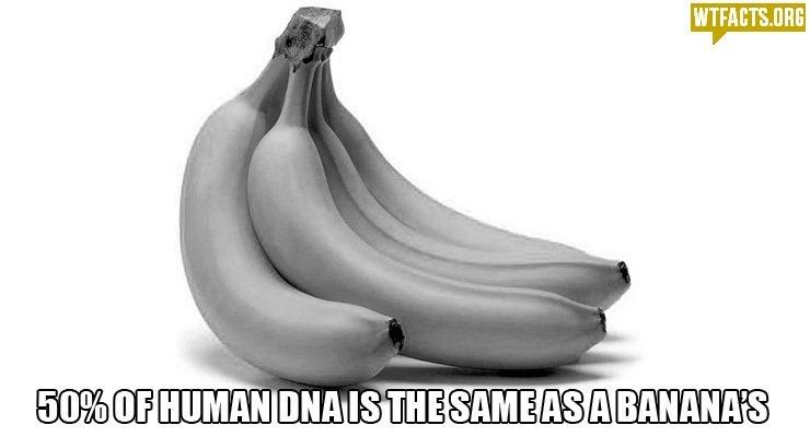 Me+ My girlfriend = 1 banana + 1 human!?. Source: wtfacts.org/. lri) Cill HUMAN. asians are yellow bananas are yellow asians can read minds BANANAS CAN READ MINDS