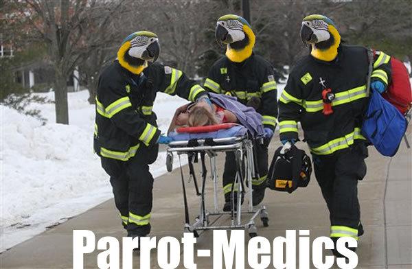 Medics. Parrot medics.