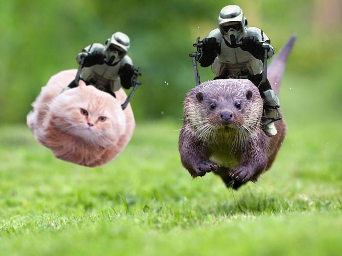 meme mashup. . cat otter stormtrooper mashup star wars