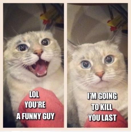 Meow.. Meow. Meow. Meow. meow. meow... I lied Cats