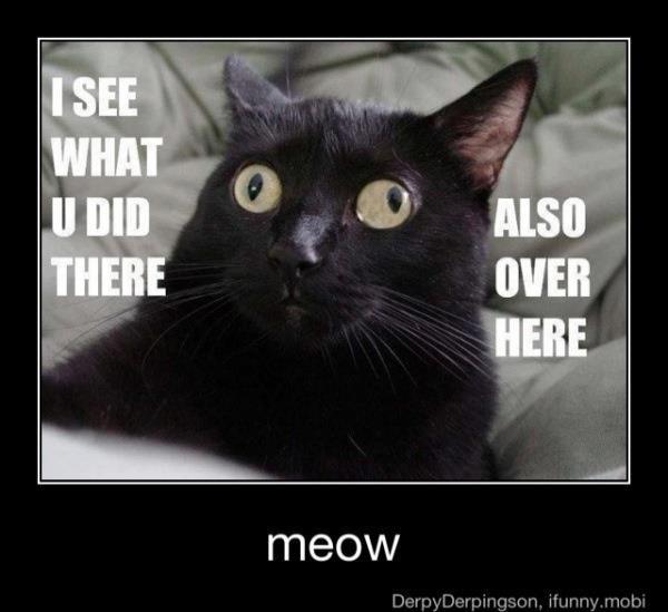 Meow_0960a7_3883818.jpg