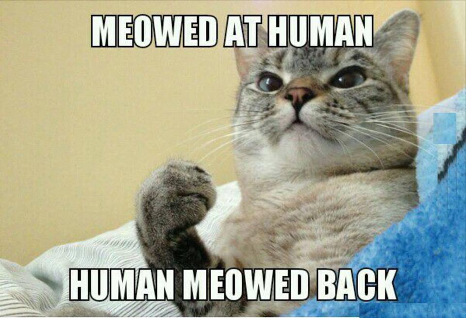 Meow. . Huh.