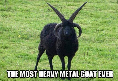 Metal as Fck. .