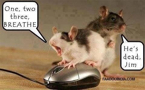 Mice. .