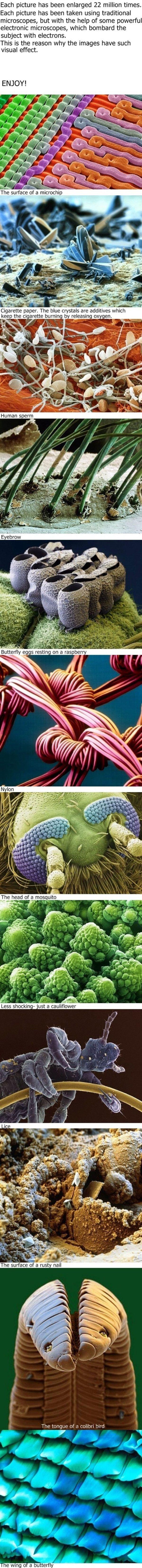 Microscope. .. I feel like I should wash my eyebrows or something...