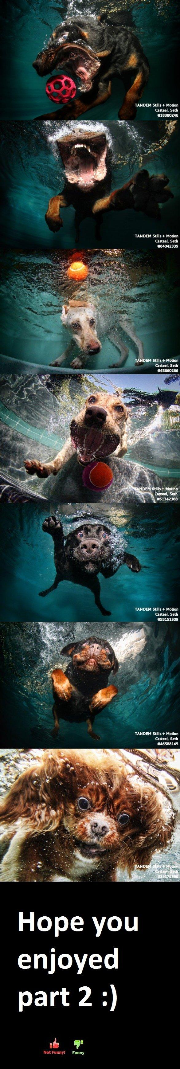 Moar Underwater Dogs!. U asked 4 more i giv u more here, has. manna ml: e Mum. anal, seth amazes TANDEM sun ' Seth amass TANDEM suns ' Manna Canal. an TANDEM su