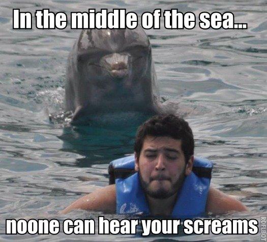 Molestor Dolphin. . In the mime atthe% sea... Bertsechs molestation rape on the open