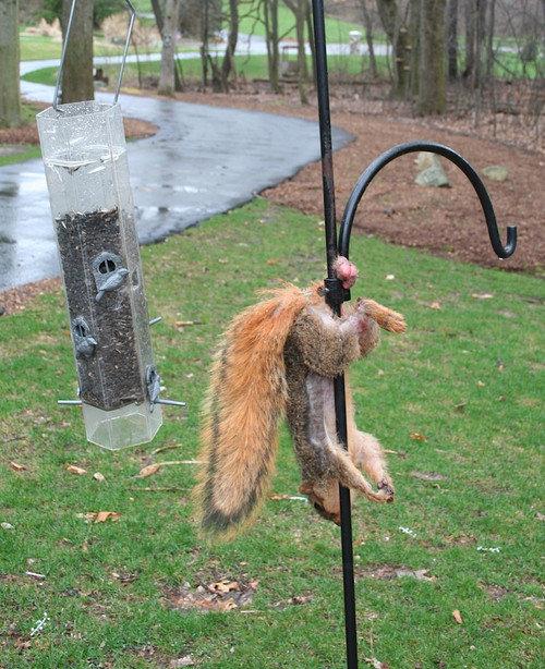 MORBID Well that ended up nuts.... badam, tsssss...... That hurt me deep. morbid Squirrel Big Nuts