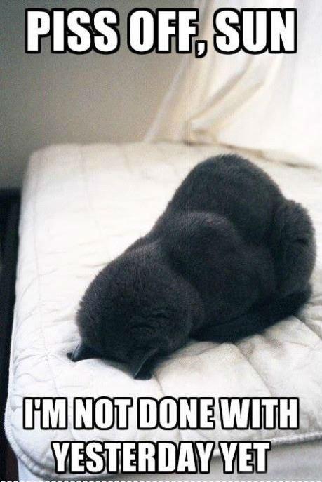 Mornings. ..... Muslim cat is busy praying...