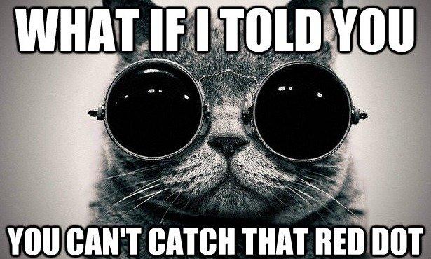 morpheus cat. .