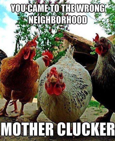 Mother Clucker. Description. iii' EAI an F 3 q Chicken Neighborhood Mother
